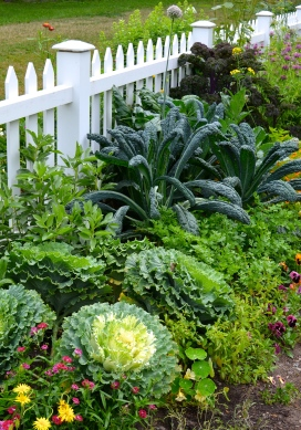 Veggies used for beauty in the edible garden.