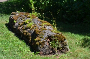 A moss covered log in a garden setting.