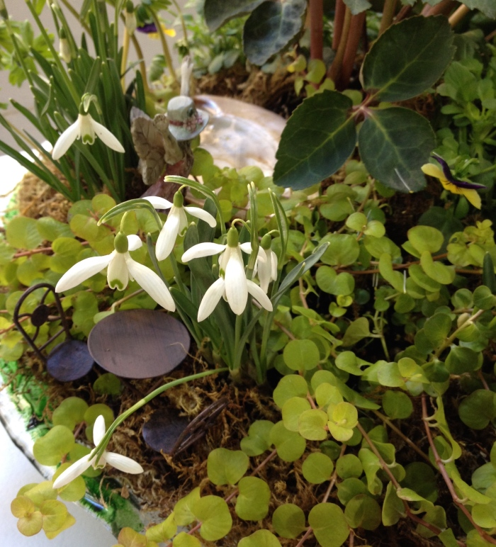 A fall bulb planting idea includes using Snowdrops in a fairy garden container.