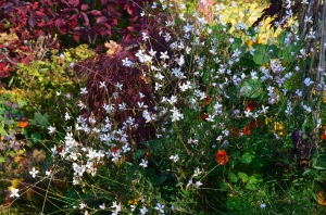A mix of colour and texture in a garden bed with pale pink Gaura as a focal point.
