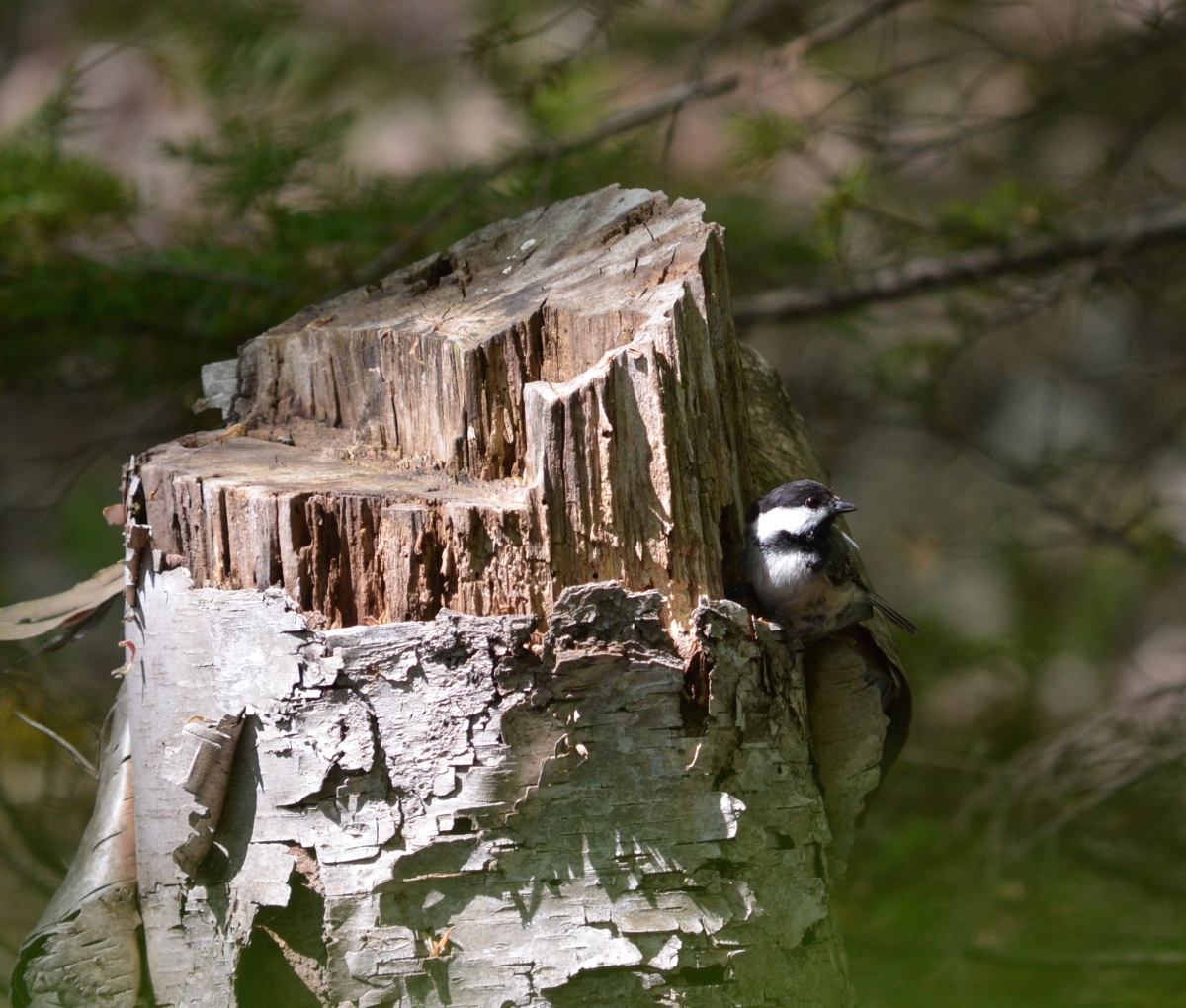 A small bird sits on the side of a tree stump