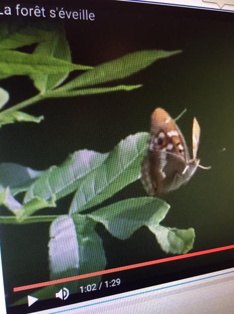 Still from FranceTV videa