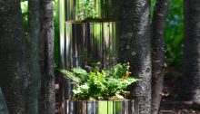 A small specimen fern in a silver container in a woodland setting.