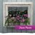 A hanging planter surrounded by an ornate frame by Proven Winners.
