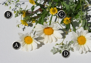 A container recipe featuring daisies