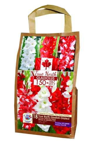 Red and white gladiolus from Florissa.