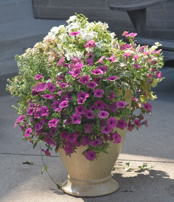 A container filled with flowers featuring pink and white blooms.
