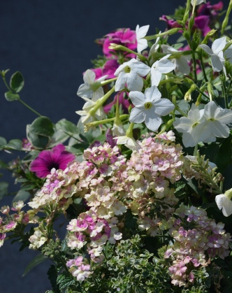 A container recipe includes flowers in shades of pink and white