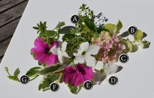 A container recipe of flowers featuring nicotiana