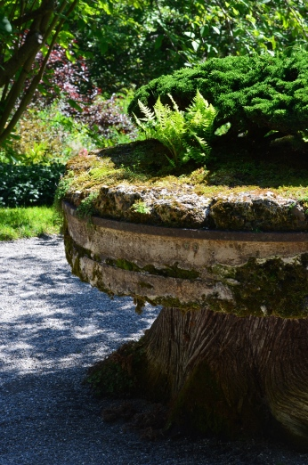 A large tree stump supports a mill wheel and plants.