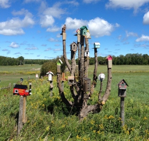 A dead tree is used as a support for many bird houses