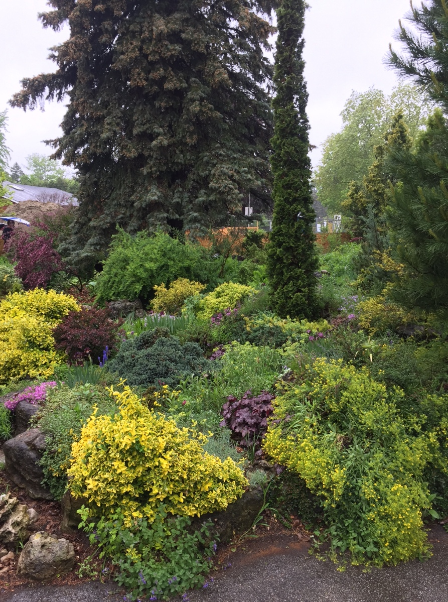 A front garden in spring is filled with plants with a variety of coloured foliage.