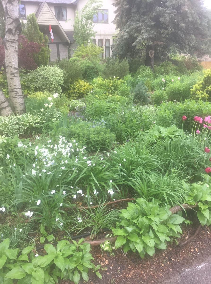 A front garden is filled with plants and flowers