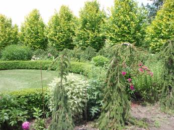 Weeping conifers surround a garden bed