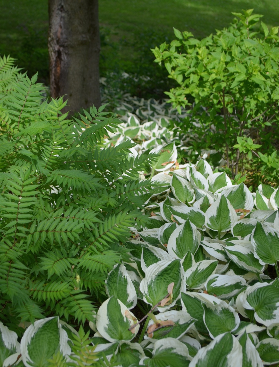 A stream of hostas flows down the hillside flanking one side of the driveway.