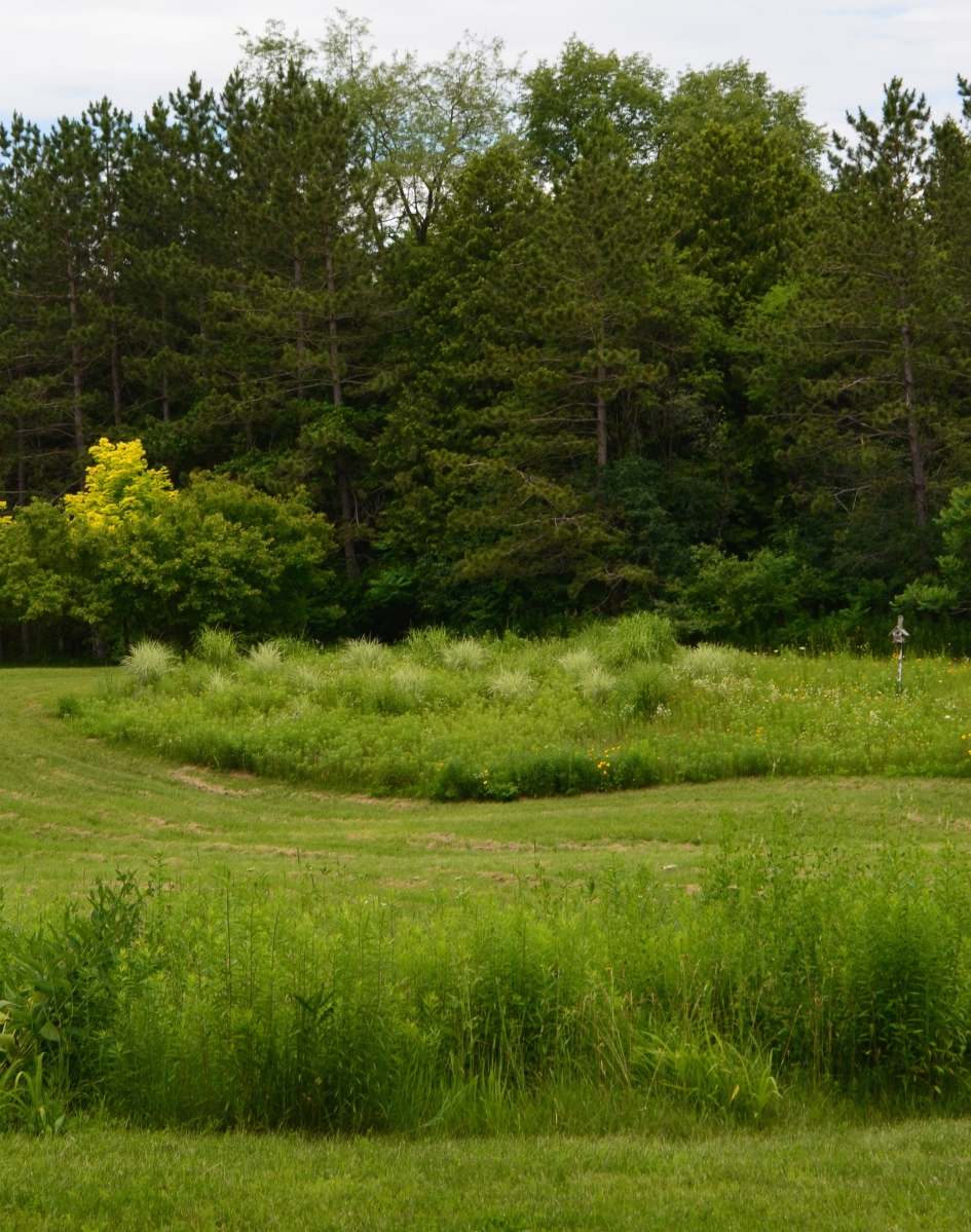 Grasses are mowed to give definition to the meadow framed by the forest.