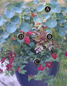 A diagram indicating the components of a container recipe featuring nasturtiums and verbena