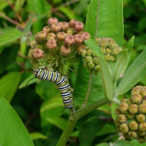 Plant flower seeds in fall for summer blooms and feed butterflies