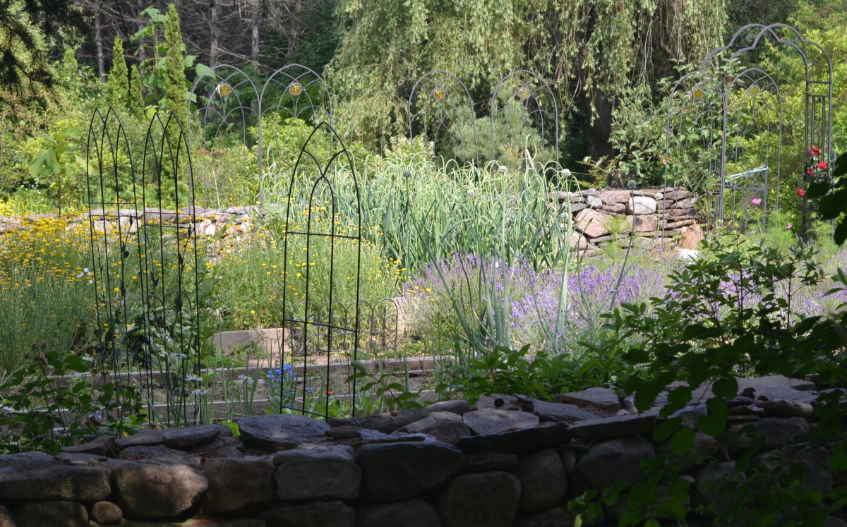 A vegetable garden filled with metal plant supports
